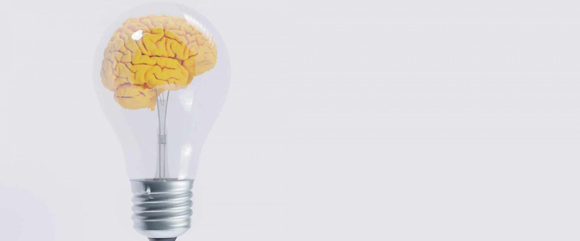 Reptiliengehirn . Elementartraining